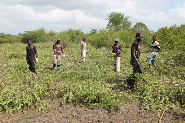 Men clearing the fields.